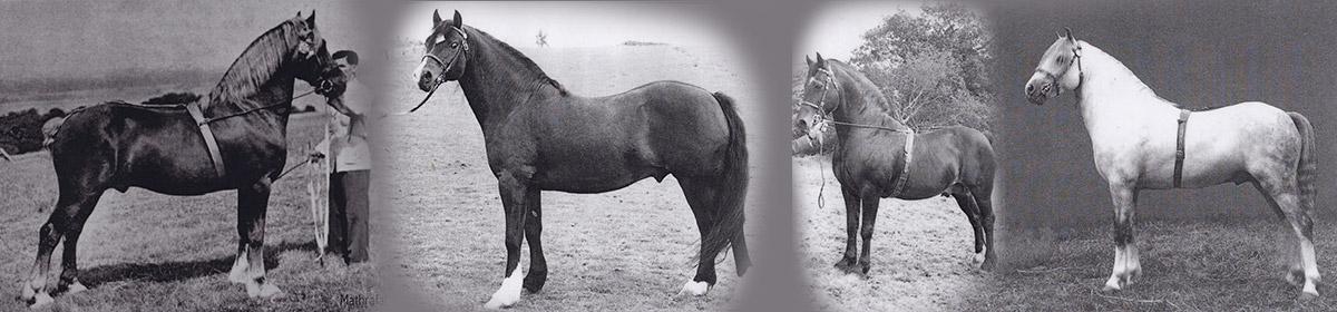 Lampeter Stallion Show header