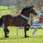 Fronarth Prince of Wales - Section D champion & overall in hand champion